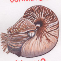 A Nautilus asking Wanna Be Nauti?
